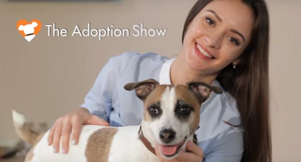 """DOGTV's """"The Adoption Show"""""""