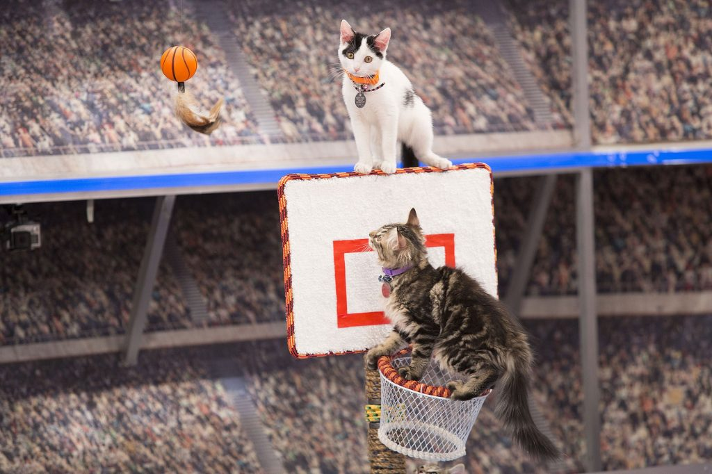 "Kittens in the inaugural ""Meow Madness"" TV special."