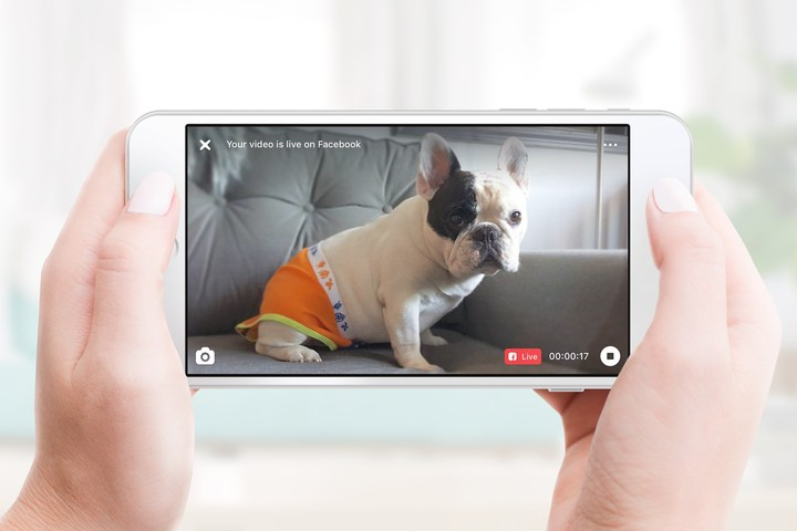 Manny the Frenchie goes live on Facebook via Petcube.