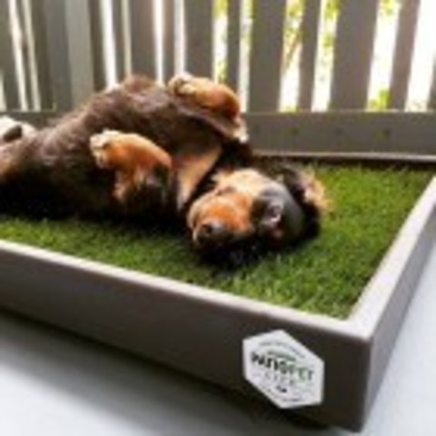 Patio Pet Life pet potty pad