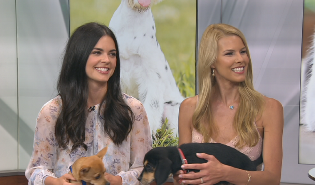 "Katie Lee and Beth Stern promoting ""Clear the Shelters"" Day on WNBC-TV New York"
